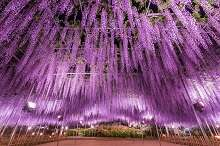 Direct bus runs Ashikaga Flower Park to/from Sano Premium Outlets